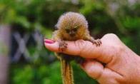 Padykusi beždžionė