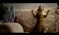 Džeksono katė