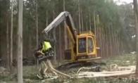 Japoniškas medžių kirtimas