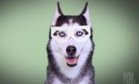Dubstep šuo