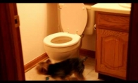 Tualeto sargybinis