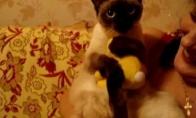 Katuko žaisliukas