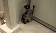 Katė ir šaldytuvas