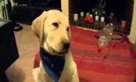 Lūžinėjantis šuo