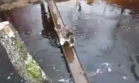 Katuko tiltas