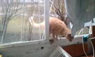 Katė-voras