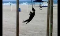 Šuo gimnastas
