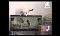 Žuvies ataka