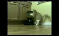 Katė prieš maitinimo aparatą