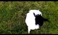 šuo su pampersais