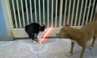 Džedajus katinas prieš pitbulį