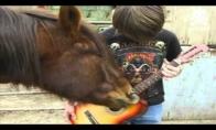 Arklys gitaristas
