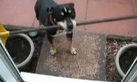 Atkaklus šuo