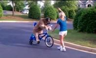 Šuo važiuoja dviračiu