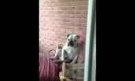 Patvirkęs šunelis