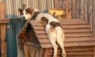 Būdos šuo
