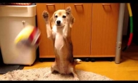 Šuo: lygis Azija