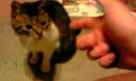 Šeimininkas nušauna katiną [N18]