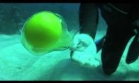 Kiaušinis vandenyje