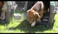 Iš laboratorijų išgelbėti šunys