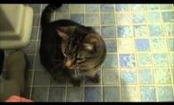 Katinas klauso komandų