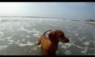 Šuo vs. Krabas