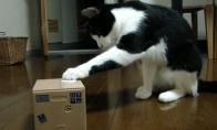Katinas ir dėžutė