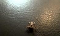 Mažytis voriukas
