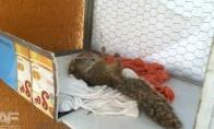 Negailestingai nužudyta voverė