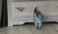 Katinas šokinėją