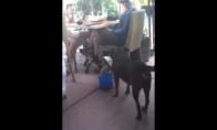 Šuniškas aptarnavimas - žmogiški arbatpinigiai