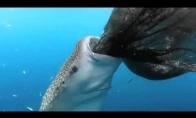 Ryklys čiulpikas