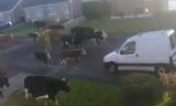 Karvės gatvėje