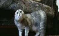 Griežtai NE sakantis katinas