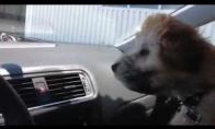 Net šuo nemėgsta kondicionieriaus
