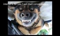 Kas yra interneto karaliai, Katinai ar sunys ar .... wait for it !