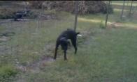 Šuo šlapinasi ant elektrinės tvoros