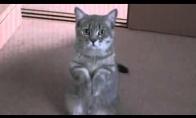 Maldaujantis kačiukėlis