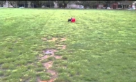 Saltukus darantis šunėkas