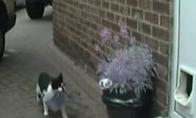 Pizdintuvas katinas