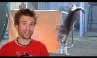 Kaip kautis su katėm