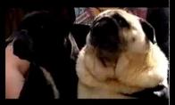 Šuo mėgstantis Betmeną