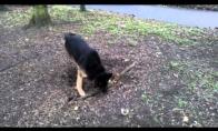 Užsispyręs šuo