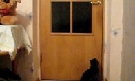 Gudrus katinas