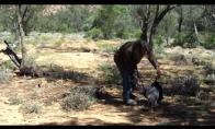 Kaip pagauti kengūrą