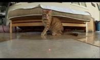 Įtempto siužeto kačių ir lazerių kova