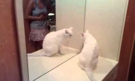 Velnio apsėsta katė