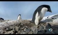 Kriminaliniai pingvinai