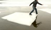 Debilas ant ledo