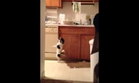 Šokantis šunėkas
